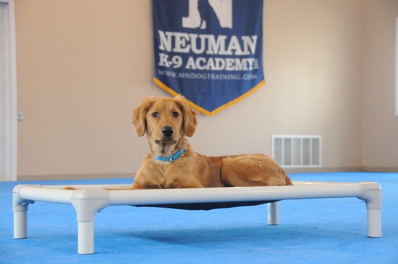 Max (Golden Retriever) - Puppy Camp Dog Training