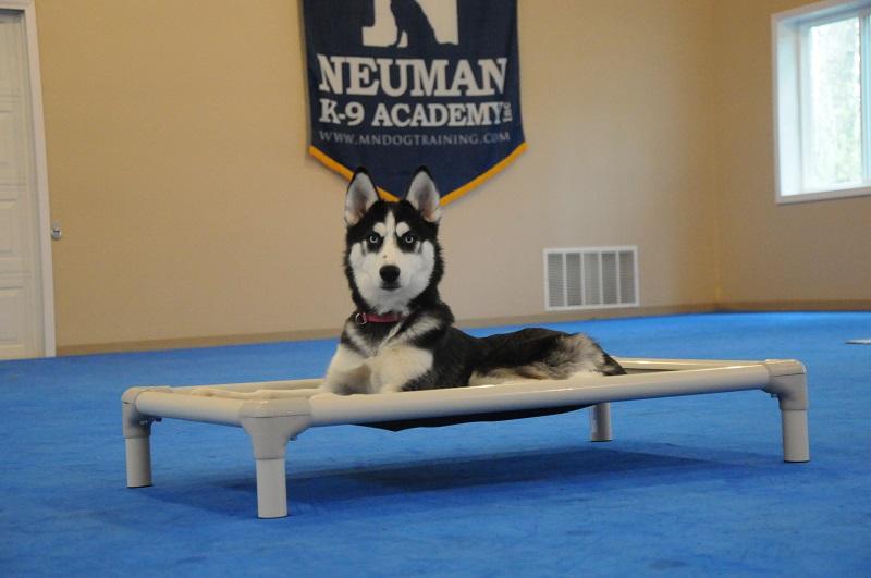 Maya (Siberian Husky) - Puppy Camp Dog Training