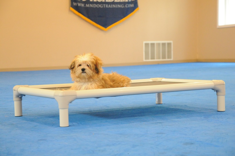 Nordy (Morky) - Puppy Camp Dog Training