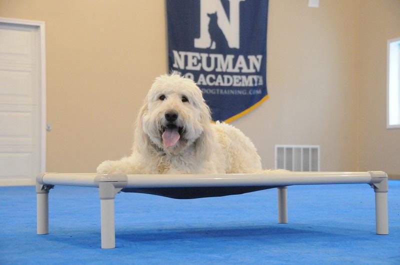 Oliver (Goldendoodle) - Boot Camp Dog Training
