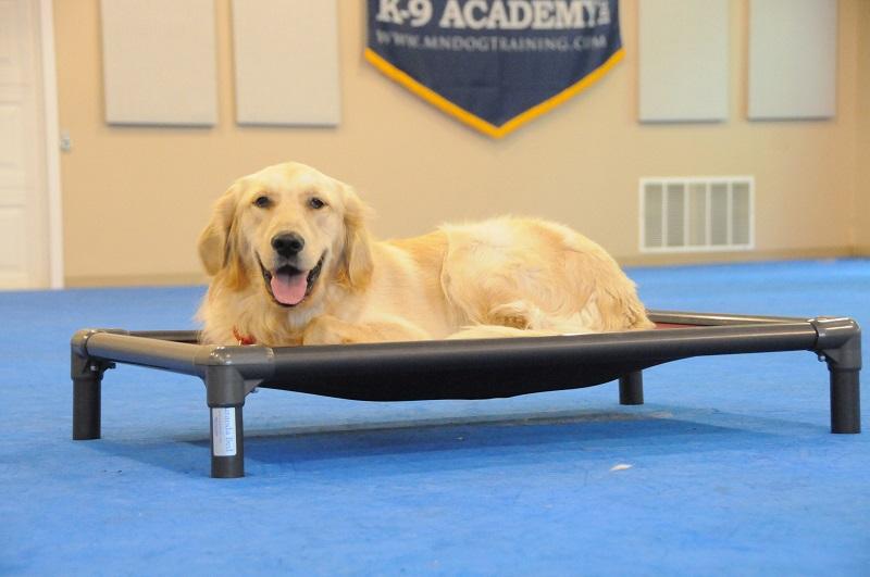 Packer (Golden Retriever) - Boot Camp Dog Training