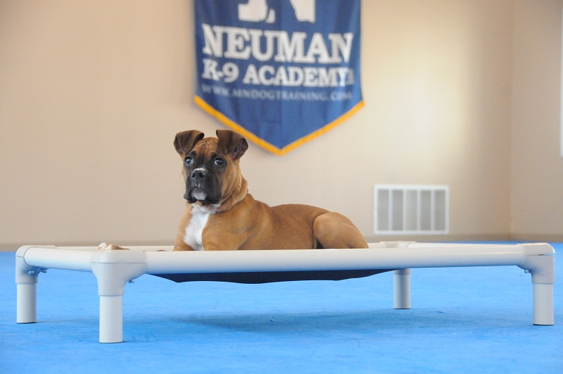 Pebbles (Boxer) - Puppy Camp Dog Training