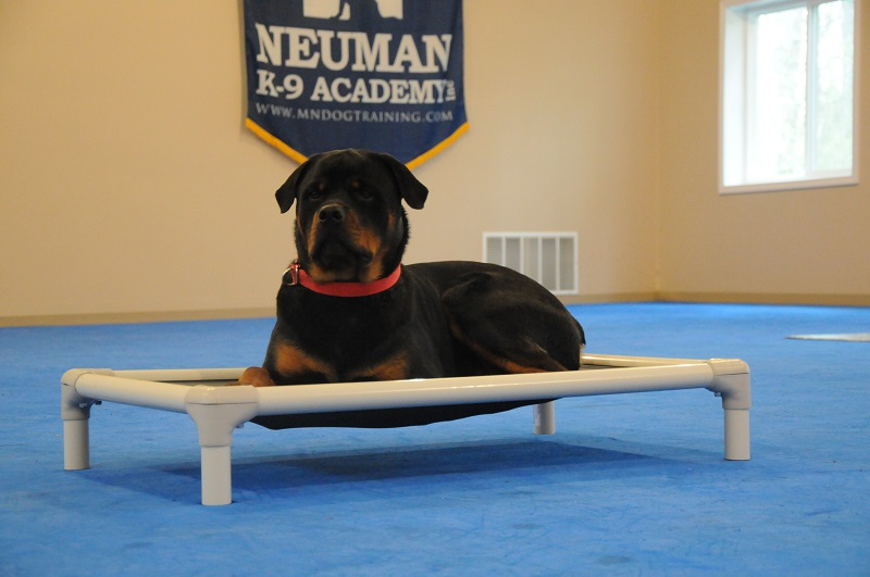 Pluto (Rottweiler) - Boot Camp Dog Training