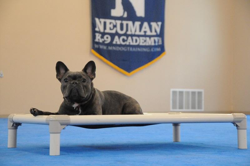 Poppy (French Bulldog) - Boot Camp Dog Training