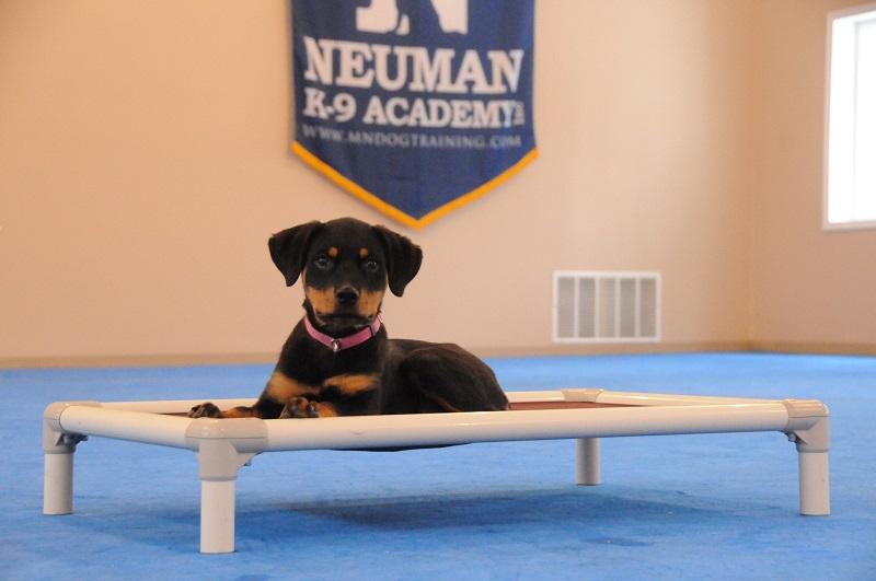 Rebel (Rottweiler) - Boot Camp Dog Training