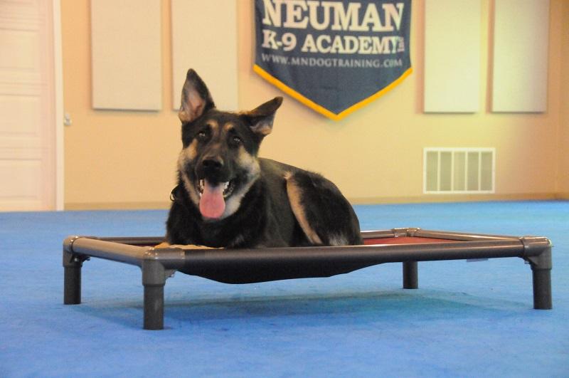 Remi (German Shepherd Dog) - Boot Camp Dog Training