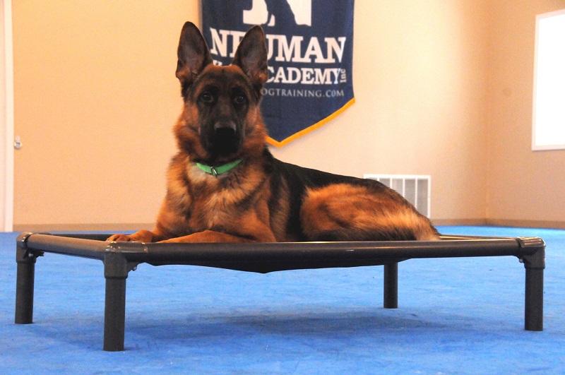 Rocky (German Shepherd) - Boot Camp Dog Training