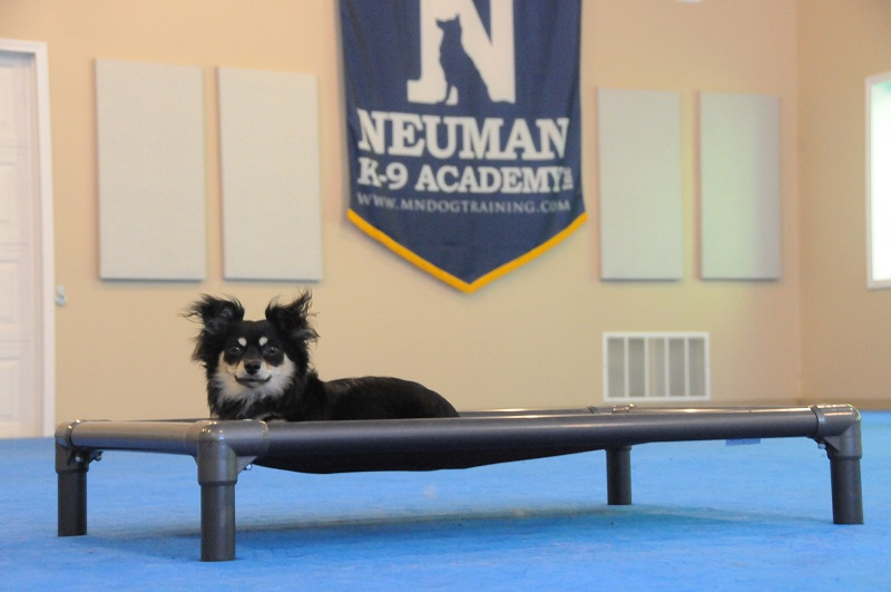 Sampson (Chihuahua) - Boot Camp Dog Training