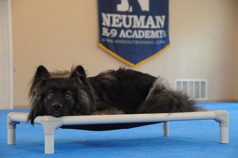 Shadow - Boot Camp Dog Training