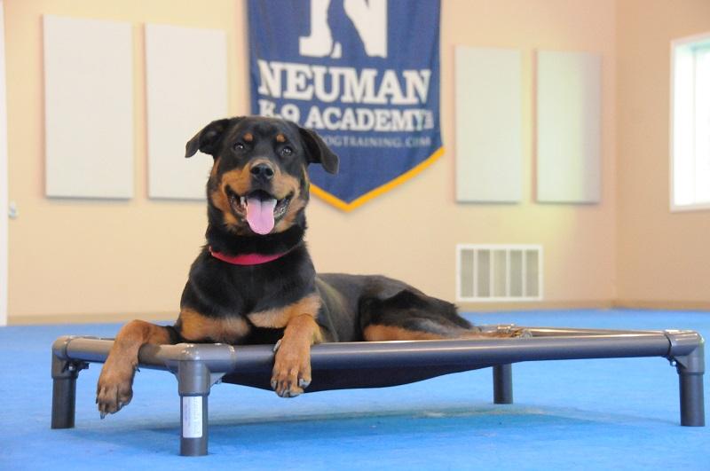 Siren (Rottweiler) - Boot Camp Dog Training