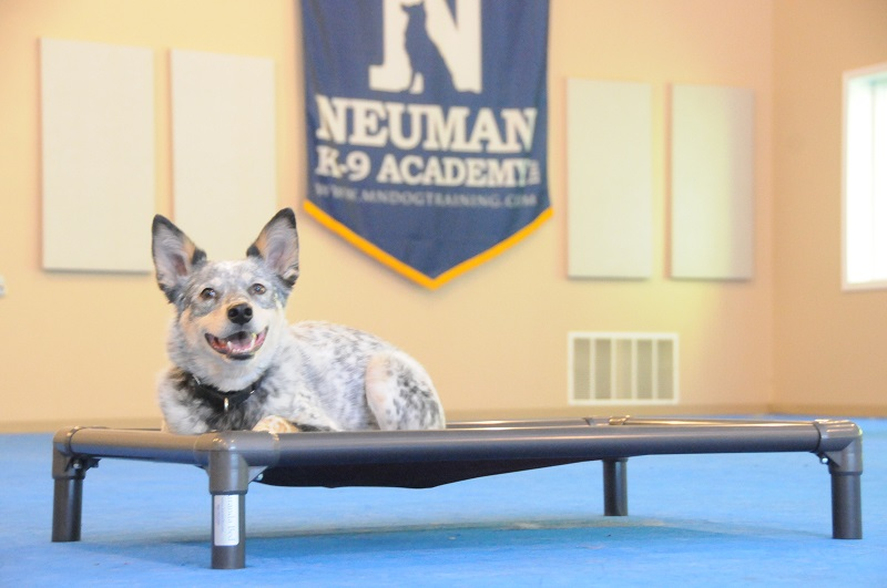 Skyler - Boot Camp Dog Training