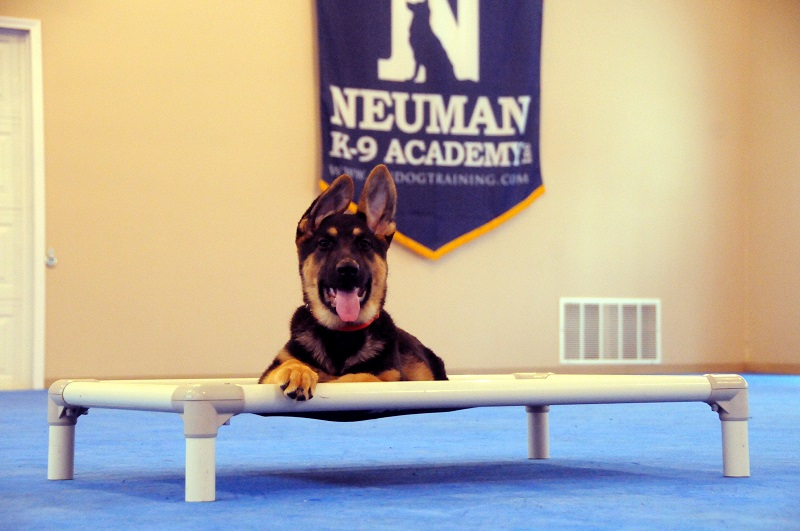 Summer (German Shepherd) - Puppy Camp Dog Training