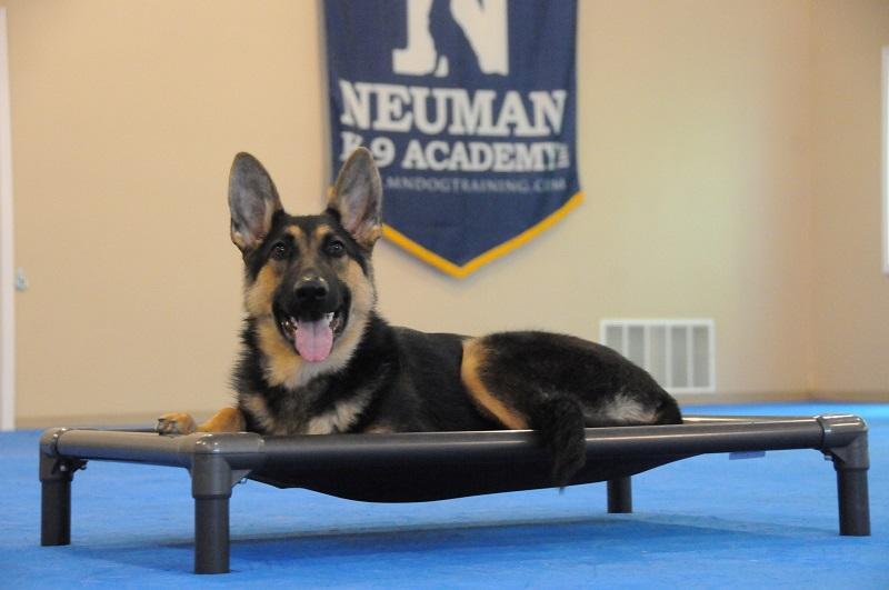 Summer (German Shepherd Dog) - Boot Camp Dog Training