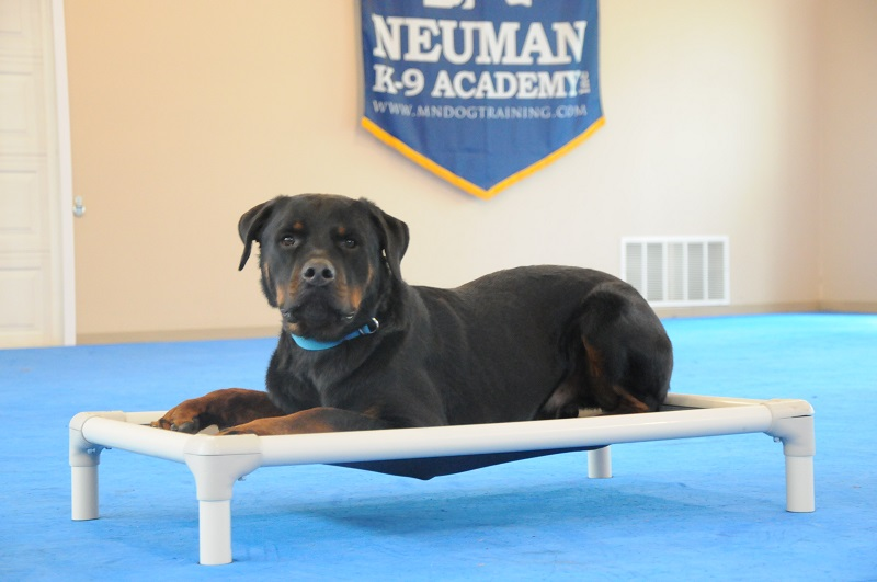 Tank (Rottweiler) - Boot Camp Dog Training
