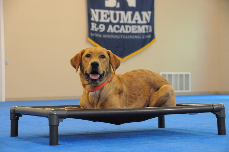 Tucker (Labrador Retriever) - Boot Camp Dog Training