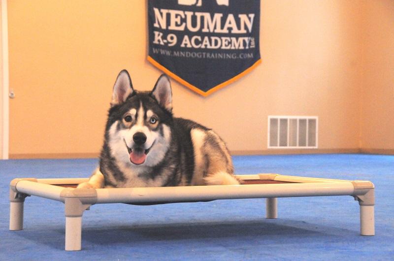 Zero (Siberian Husky) - Boot Camp Dog Training