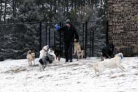 Josiah Neuman - Dog trainer and pack leader
