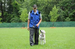 Dog obedience training in Minnesota with a Labrador Retriever