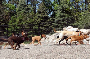 Puppy Camp Group Socialization