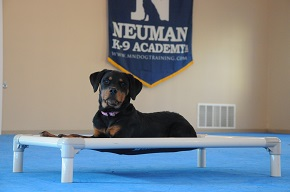 Puppy camp - Neuman K-9 Academy