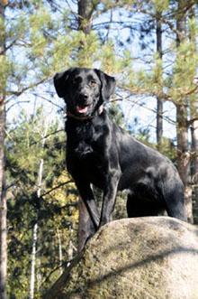 Dog Training Resources