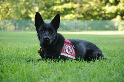 Service Dog Training Programs - Risque