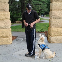 Service Dog Training - Sport K9 Training Minnesota