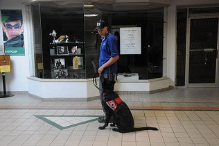 Mobility Assistance Dog Training