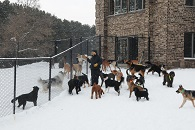 Summer Duggan - Dog Trainer