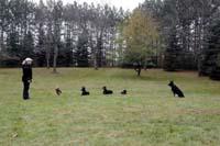 Summer Duggan - Professional Dog Trainer