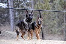 Bailey and Boogie Hagen