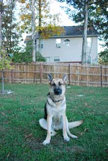 Zeus at home relaxing in the backyard