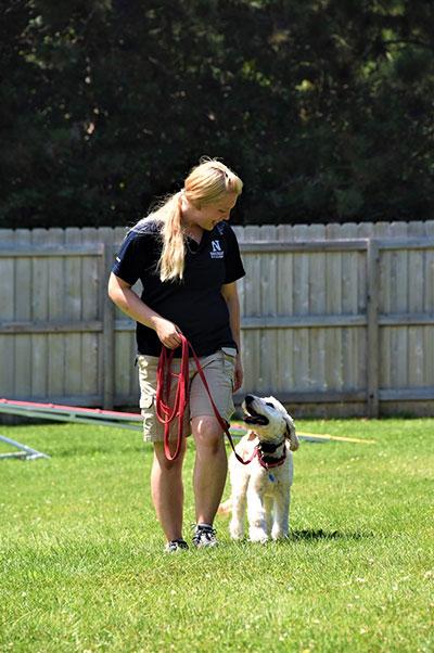 Puppy Boot Camp Student at Neuman K-9 Academy