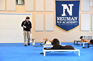 Puppy Boot Camp Obedience Training